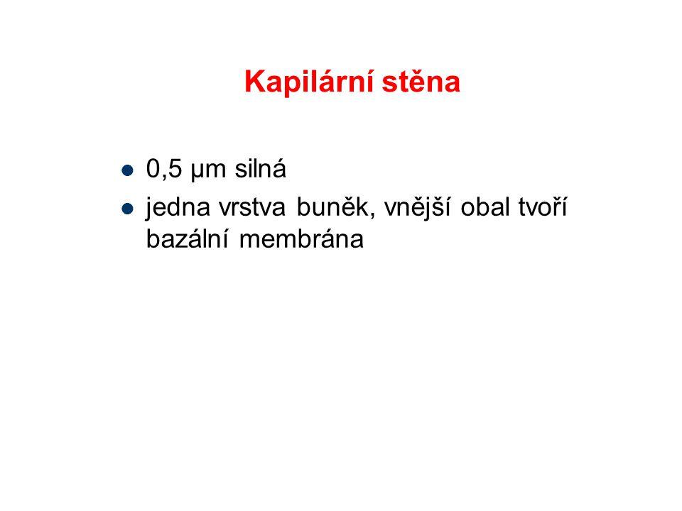 Kapilární stěna 0,5 μm silná jedna vrstva buněk, vnější obal tvoří bazální membrána