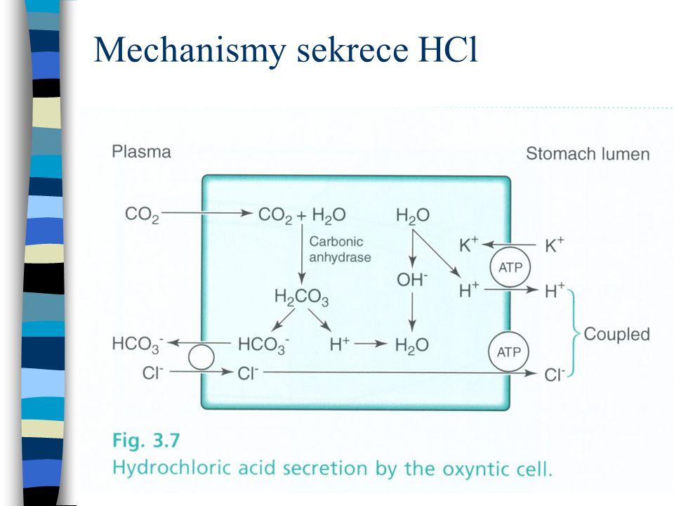 Mechanismy sekrece HCl