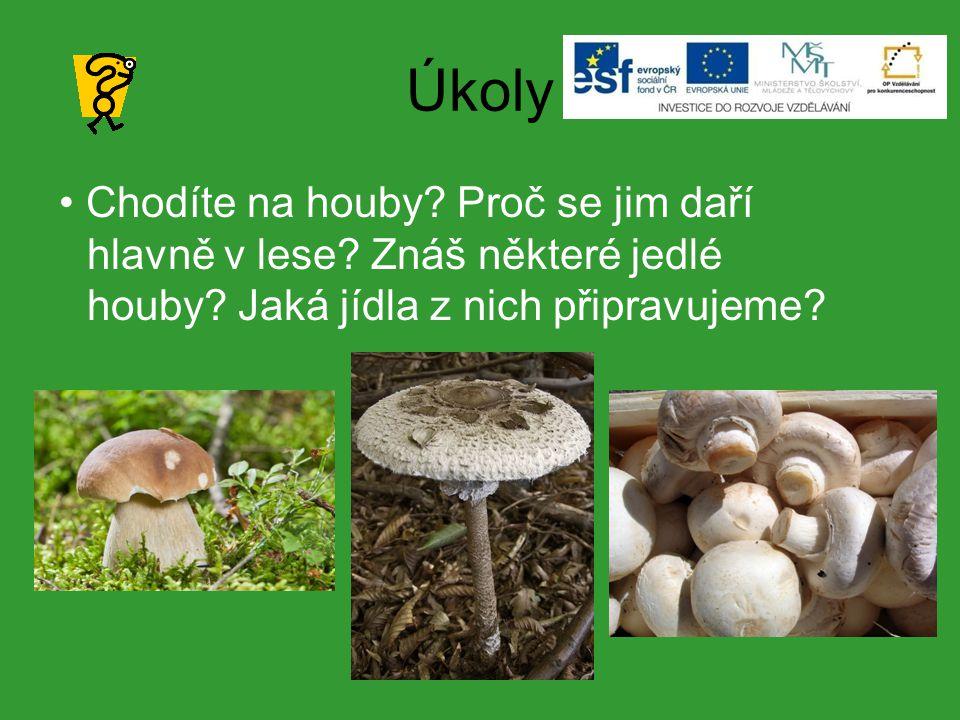 Úkoly Chodíte na houby.Proč se jim daří hlavně v lese.