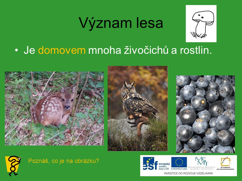 Význam lesa Je domovem mnoha živočichů a rostlin. Poznáš, co je na obrázku?