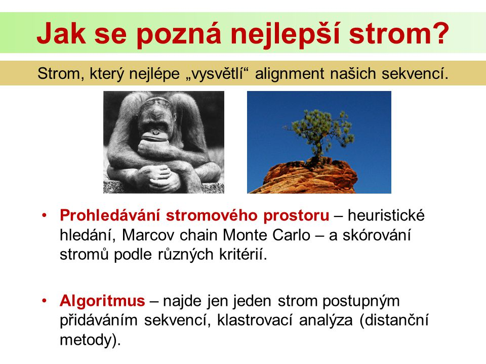 Prohledávání stromového prostoru – heuristické hledání, Marcov chain Monte Carlo – a skórování stromů podle různých kritérií.