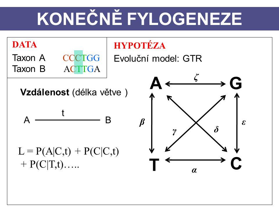DATA Taxon A CCCTGG Taxon B ACTTGA HYPOTÉZA Evoluční model: GTR Vzdálenost (délka větve ) A B t KONEČNĚ FYLOGENEZE L = P(A|C,t) + P(C|C,t) + P(C|T,t)…..