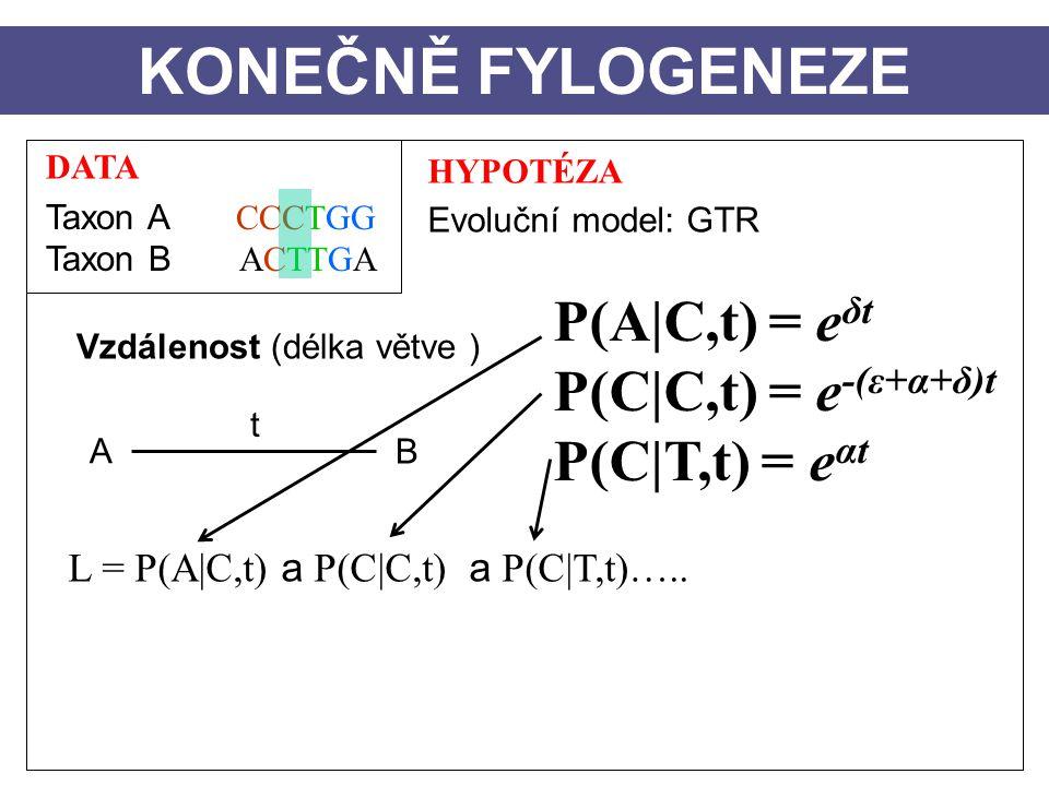 DATA Taxon A CCCTGG Taxon B ACTTGA HYPOTÉZA Evoluční model: GTR Vzdálenost (délka větve ) A B t KONEČNĚ FYLOGENEZE L = P(A|C,t) a P(C|C,t) a P(C|T,t)…..