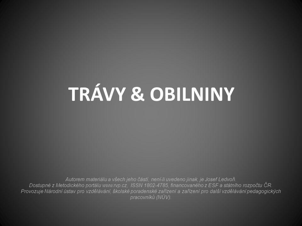 TRÁVY & OBILNINY Autorem materiálu a všech jeho částí, není-li uvedeno jinak, je Josef Ledvoň. Dostupné z Metodického portálu www.rvp.cz, ISSN 1802-47