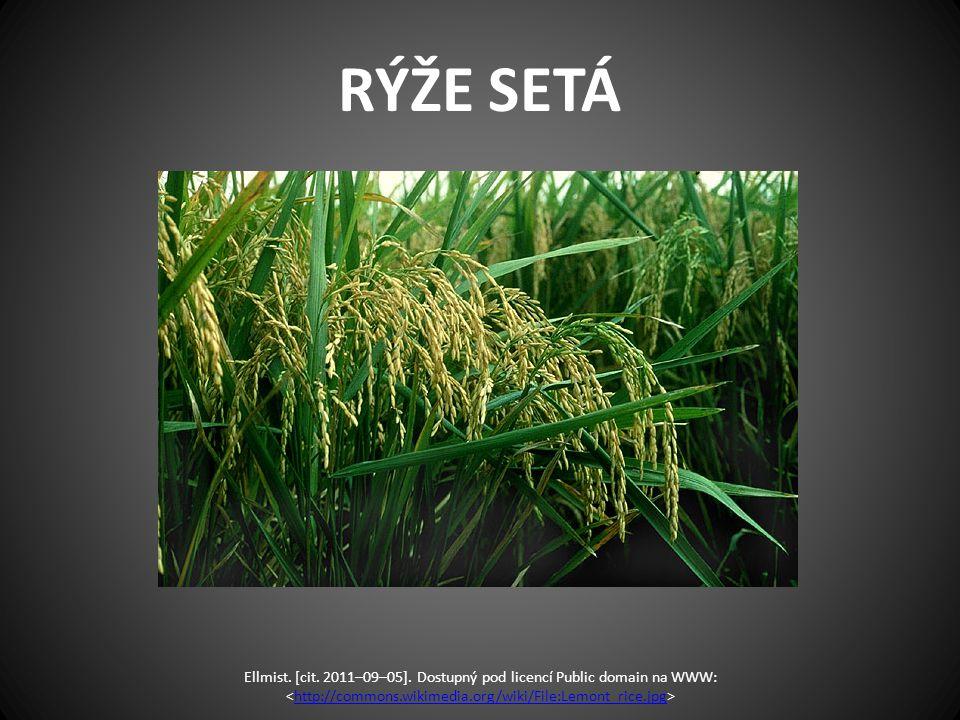 RÝŽE SETÁ Ellmist. [cit. 2011–09–05]. Dostupný pod licencí Public domain na WWW: http://commons.wikimedia.org/wiki/File:Lemont_rice.jpg