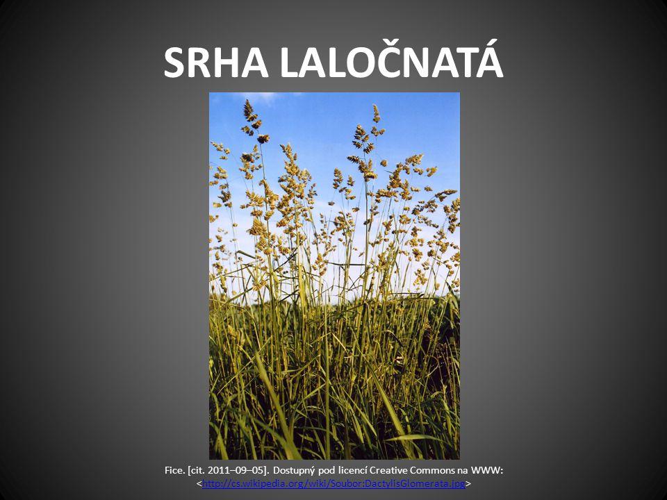 SRHA LALOČNATÁ Fice. [cit. 2011–09–05]. Dostupný pod licencí Creative Commons na WWW: http://cs.wikipedia.org/wiki/Soubor:DactylisGlomerata.jpg