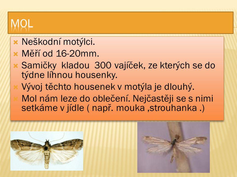  Neškodní motýlci.  Měří od 16-20mm.  Samičky kladou 300 vajíček, ze kterých se do týdne líhnou housenky.  Vývoj těchto housenek v motýla je dlouh