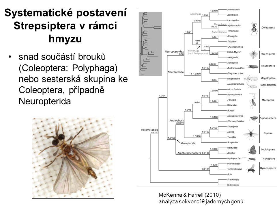 Systematické postavení Strepsiptera v rámci hmyzu McKenna & Farrell (2010) analýza sekvencí 9 jaderných genů snad součástí brouků (Coleoptera: Polypha