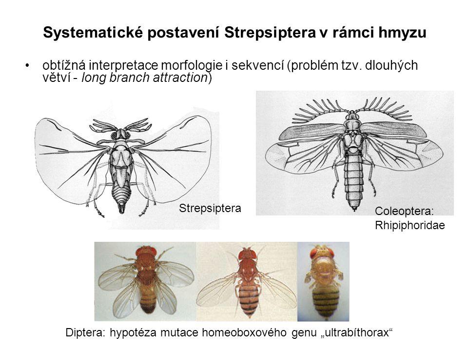 obtížná interpretace morfologie i sekvencí (problém tzv. dlouhých větví - long branch attraction) Systematické postavení Strepsiptera v rámci hmyzu St