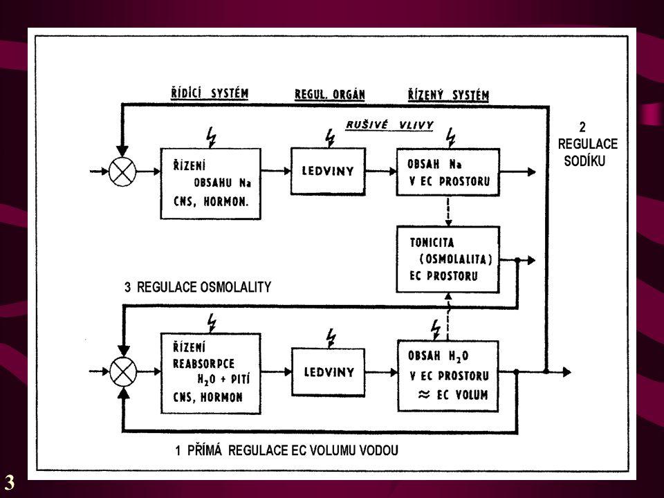 V rámci regulace žízní a adiuretinem: osmorecepce (zpětná vazba 3) funguje citlivěji, volumorecepce (vazba 1) liknavěji, ale pak mohutněji  při značných odchylkách volumu a tonicity od normy volum překonává tonicitu .