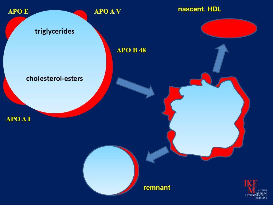 triglycerides cholesterol-esters APO B 48 APO A I APO E APO A V nascent. HDL remnant