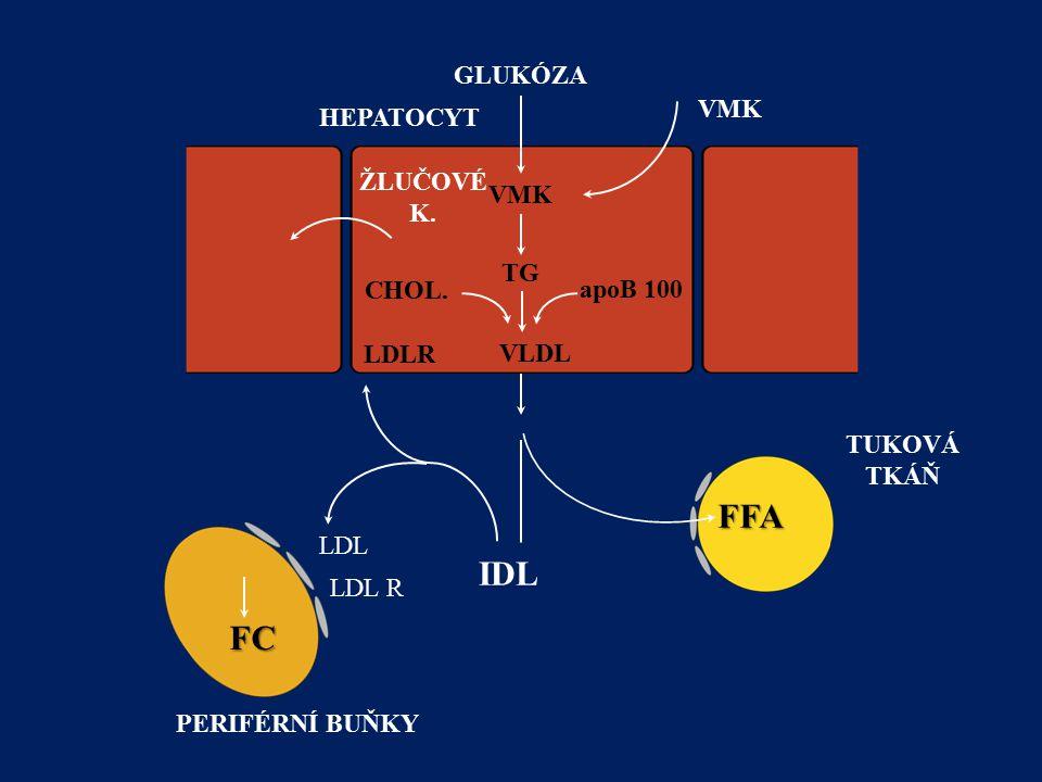 PERIFÉRNÍ BUŇKY GLUKÓZA IDL FFA TUKOVÁ TKÁŇ VMK TG VLDL LDL LDL R FC CHOL. apoB 100 VMK HEPATOCYT ŽLUČOVÉ K.