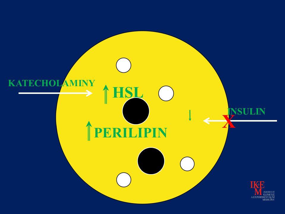 INSULIN HSL PERILIPIN KATECHOLAMINY X
