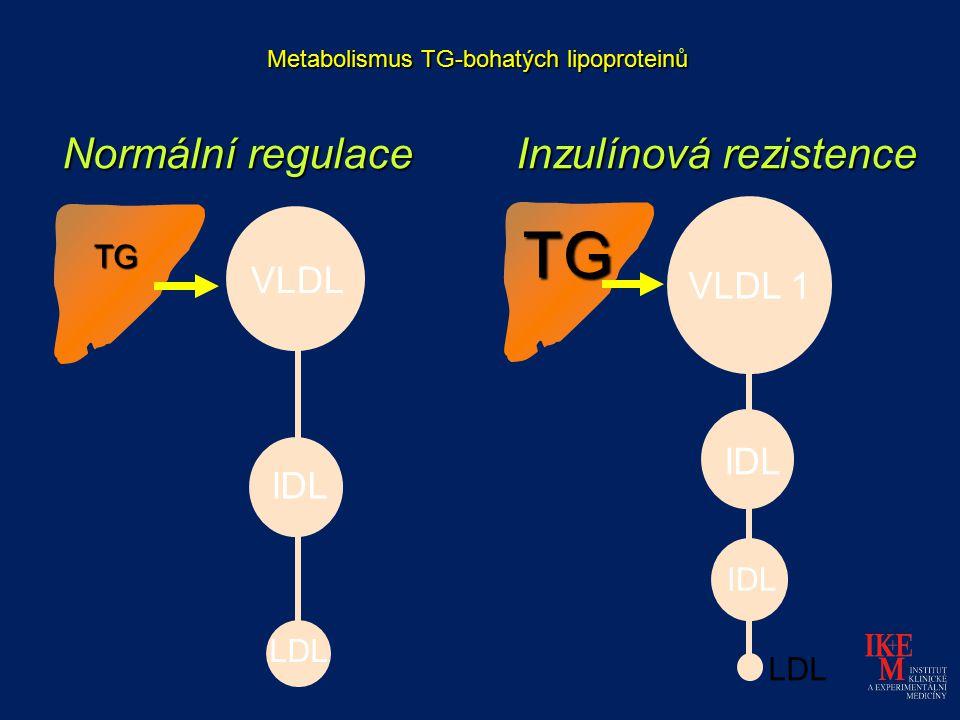 Metabolismus TG-bohatých lipoproteinů Normální regulace Inzulínová rezistence TG TG VLDL 1 IDL LDL VLDL IDL LDL