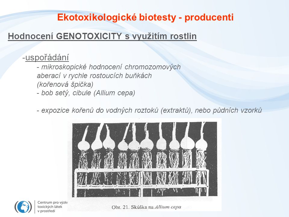 Hodnocení GENOTOXICITY s využitím rostlin -uspořádání - mikroskopické hodnocení chromozomových aberací v rychle rostoucích buňkách (kořenová špička) - bob setý, cibule (Allium cepa) - expozice kořenů do vodných roztoků (extraktů), nebo půdních vzorků Ekotoxikologické biotesty - producenti