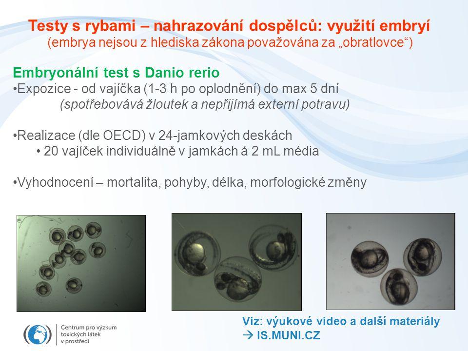"""Embryonální test s Danio rerio Expozice - od vajíčka (1-3 h po oplodnění) do max 5 dní (spotřebovává žloutek a nepřijímá externí potravu) Realizace (dle OECD) v 24-jamkových deskách 20 vajíček individuálně v jamkách á 2 mL média Vyhodnocení – mortalita, pohyby, délka, morfologické změny Testy s rybami – nahrazování dospělců: využití embryí (embrya nejsou z hlediska zákona považována za """"obratlovce ) Viz: výukové video a další materiály  IS.MUNI.CZ"""