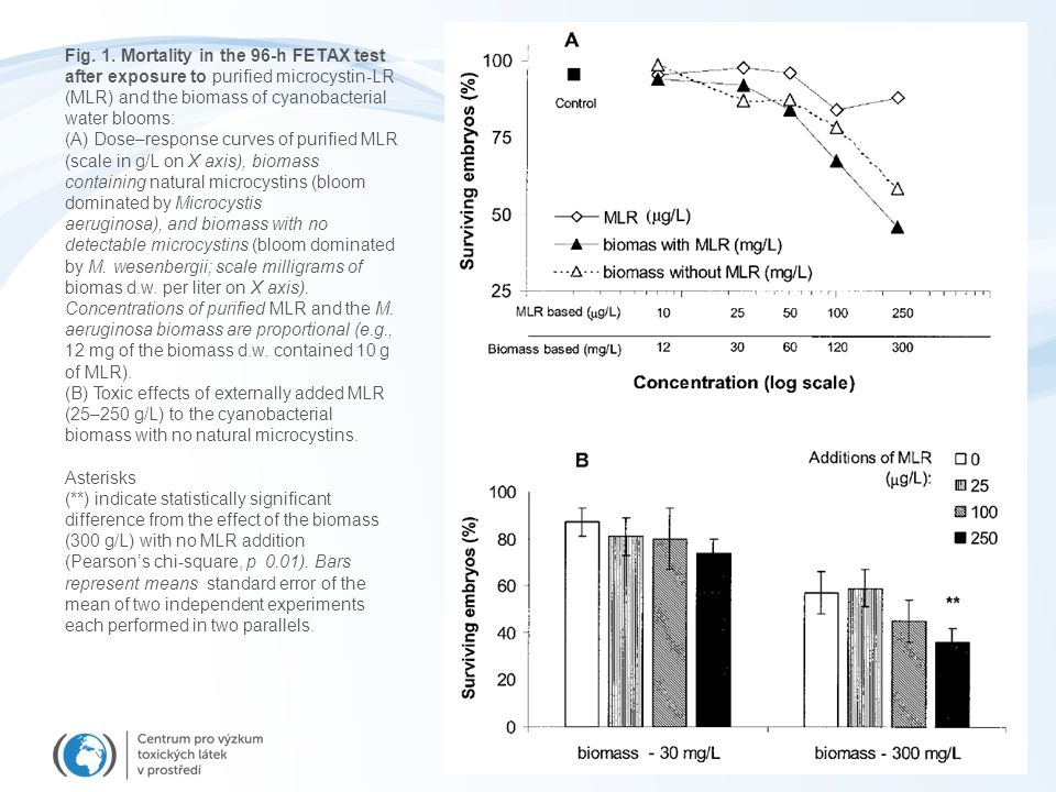 Fig. 1. Mortality in the 96-h FETAX test after exposure to purified microcystin-LR (MLR) and the biomass of cyanobacterial water blooms: (A) Dose–resp