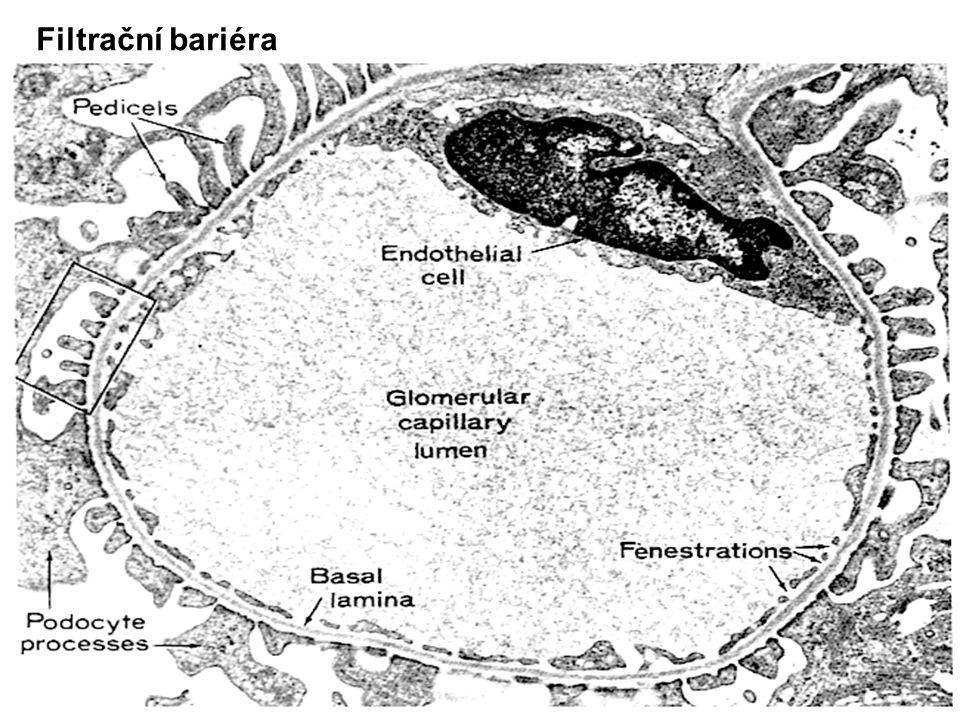 10 Filtrační bariéra