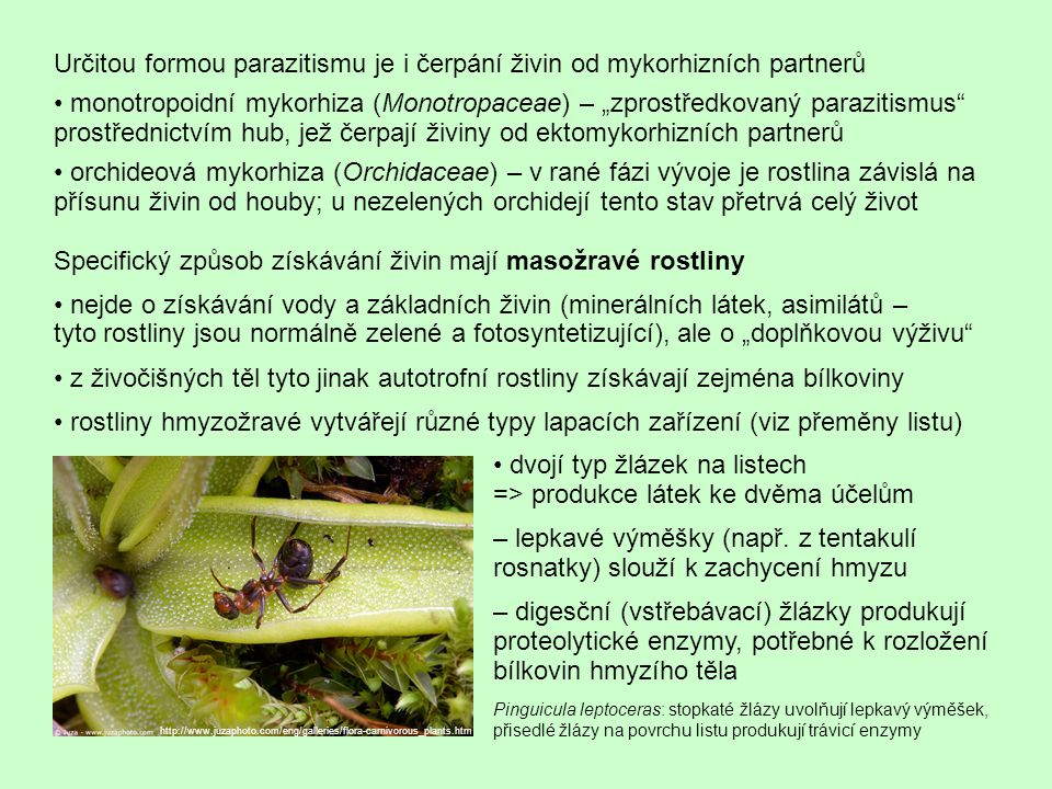 """Určitou formou parazitismu je i čerpání živin od mykorhizních partnerů monotropoidní mykorhiza (Monotropaceae) – """"zprostředkovaný parazitismus"""" prostř"""