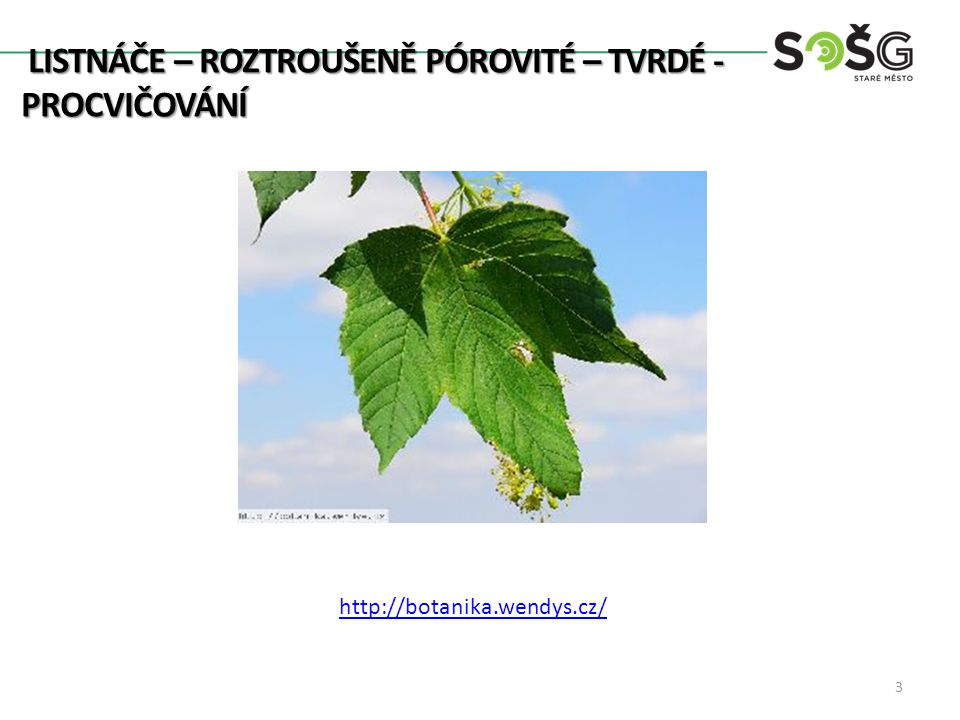 LISTNÁČE – ROZTROUŠENĚ PÓROVITÉ – TVRDÉ- PROCVIČOVÁNÍ http://botanika.wendys.cz/