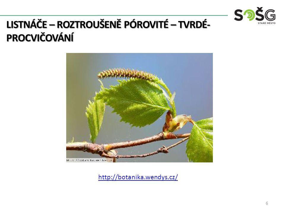 LISTNÁČE – ROZTROUŠENĚ PÓROVITÉ – TVRDÉ- PROCVIČOVÁNÍ 6 http://botanika.wendys.cz/