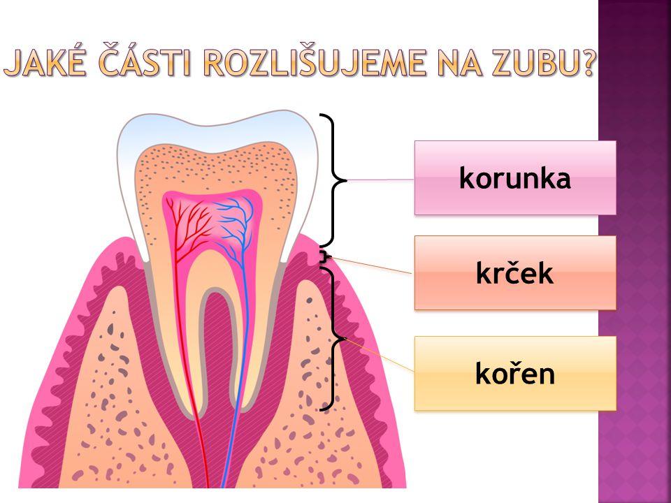 sklovina zubovina (dentin ) zubní dřeň