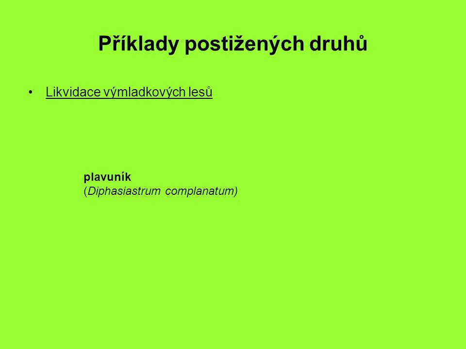Příklady postižených druhů Likvidace výmladkových lesů plavuník (Diphasiastrum complanatum)