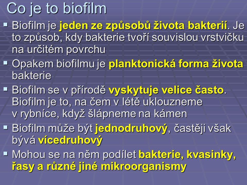 Co je to biofilm  Biofilm je jeden ze způsobů života bakterií. Je to způsob, kdy bakterie tvoří souvislou vrstvičku na určitém povrchu  Opakem biofi