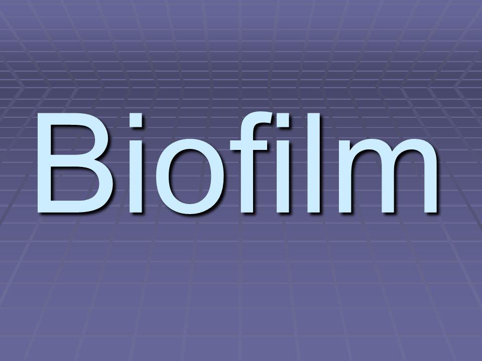 Zubní plak – biofilm  Přilnavá mikrobiální vrstva na povrchu zubu = živé i mrtvé bakterie + jejich produkty + složky hostitelské (ze slin)  Nedá se opláchnout, odstranit lze pouze mechanicky  Nejčastěji zastoupeným rodem Actinomyces sp.