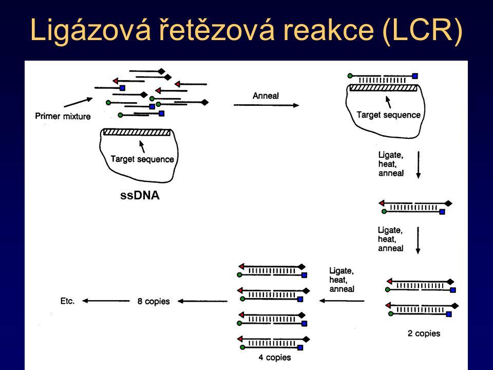 Ligázová řetězová reakce (LCR) ssDNA