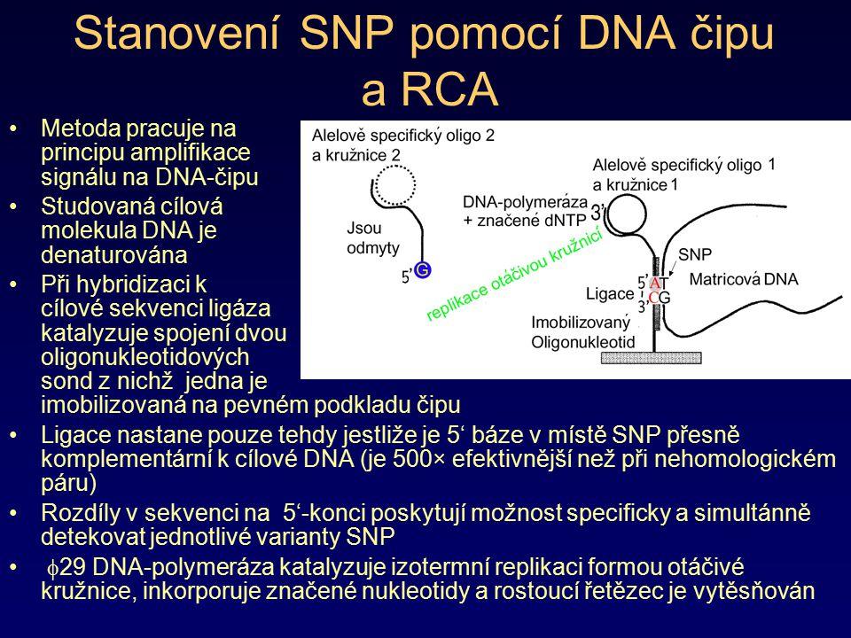 Stanovení SNP pomocí DNA čipu a RCA Metoda pracuje na principu amplifikace signálu na DNA-čipu Studovaná cílová molekula DNA je denaturována Při hybri
