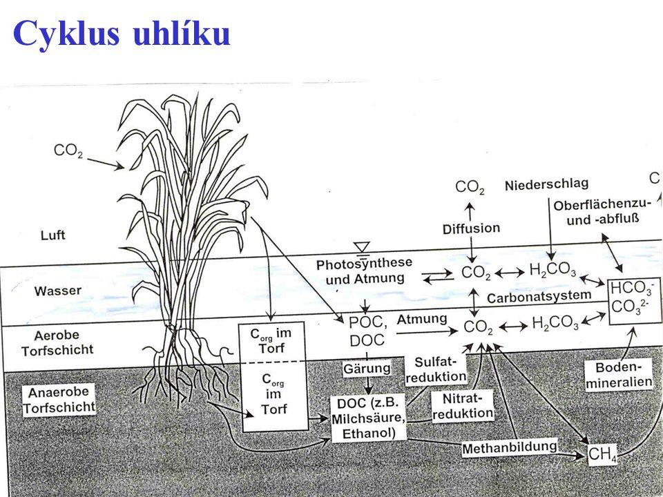 Cyklus dusíku Hlavní chemické transformace N * mineralizace: organický dusík se mění na NH 4 + * nitrifikace: NH 4 + se za pomoci bakterií r.