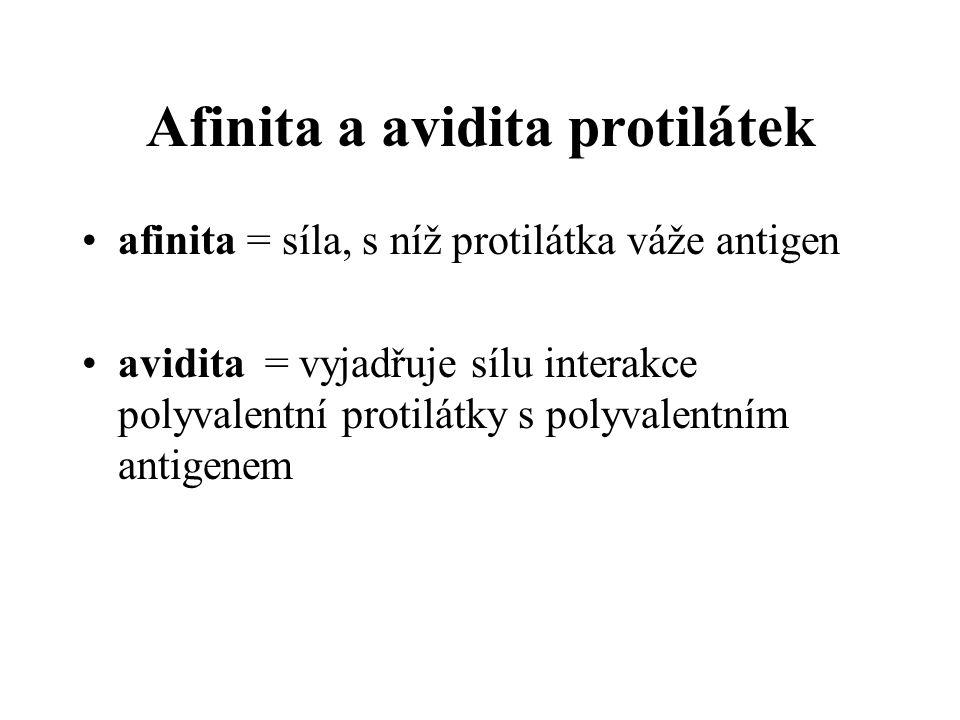 Afinita a avidita protilátek afinita = síla, s níž protilátka váže antigen avidita = vyjadřuje sílu interakce polyvalentní protilátky s polyvalentním