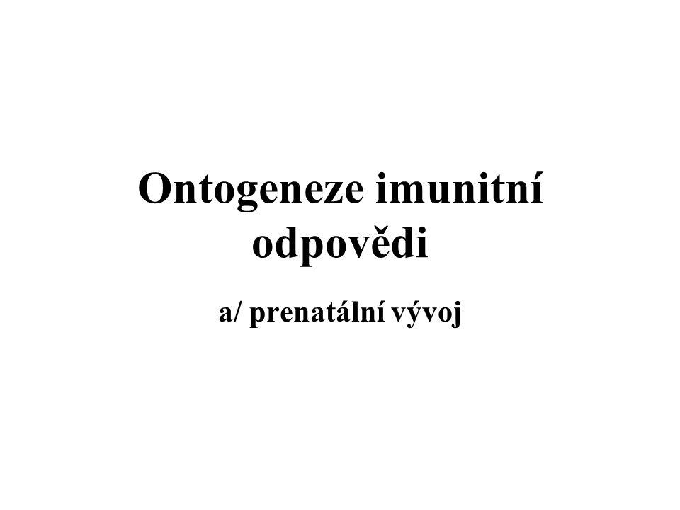 Ontogeneze imunitní odpovědi a/ prenatální vývoj