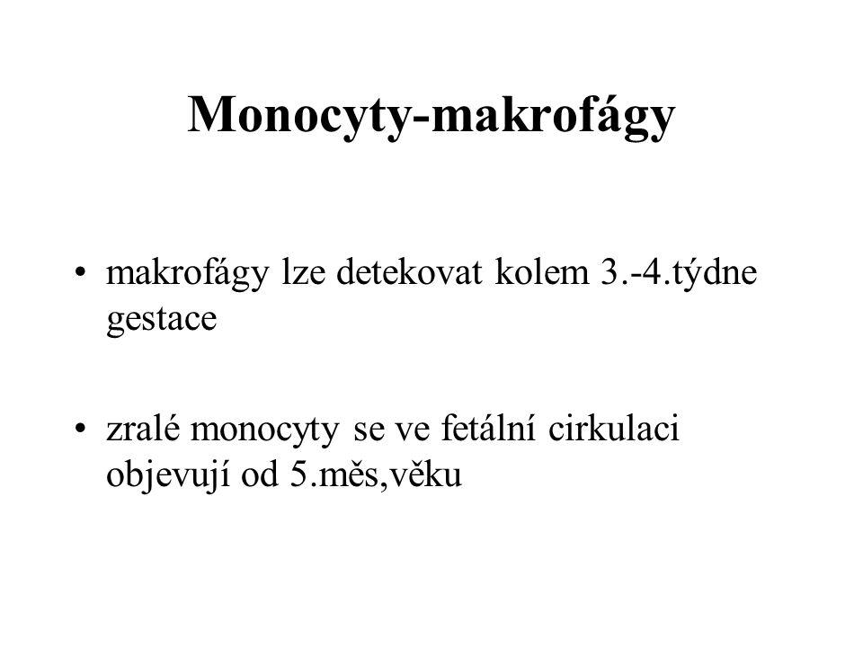 Monocyty-makrofágy makrofágy lze detekovat kolem 3.-4.týdne gestace zralé monocyty se ve fetální cirkulaci objevují od 5.měs,věku