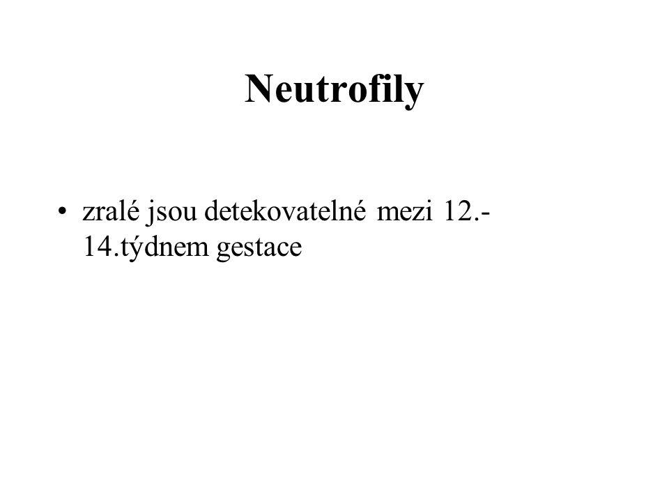 Neutrofily zralé jsou detekovatelné mezi 12.- 14.týdnem gestace