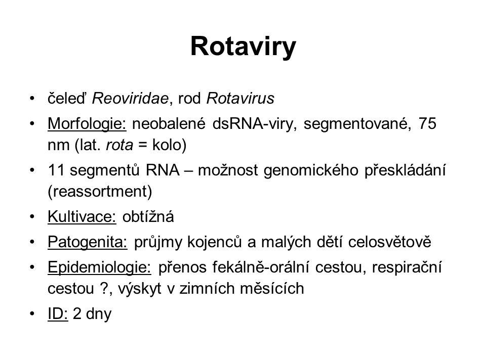 Rotaviry čeleď Reoviridae, rod Rotavirus Morfologie: neobalené dsRNA-viry, segmentované, 75 nm (lat. rota = kolo) 11 segmentů RNA – možnost genomickéh