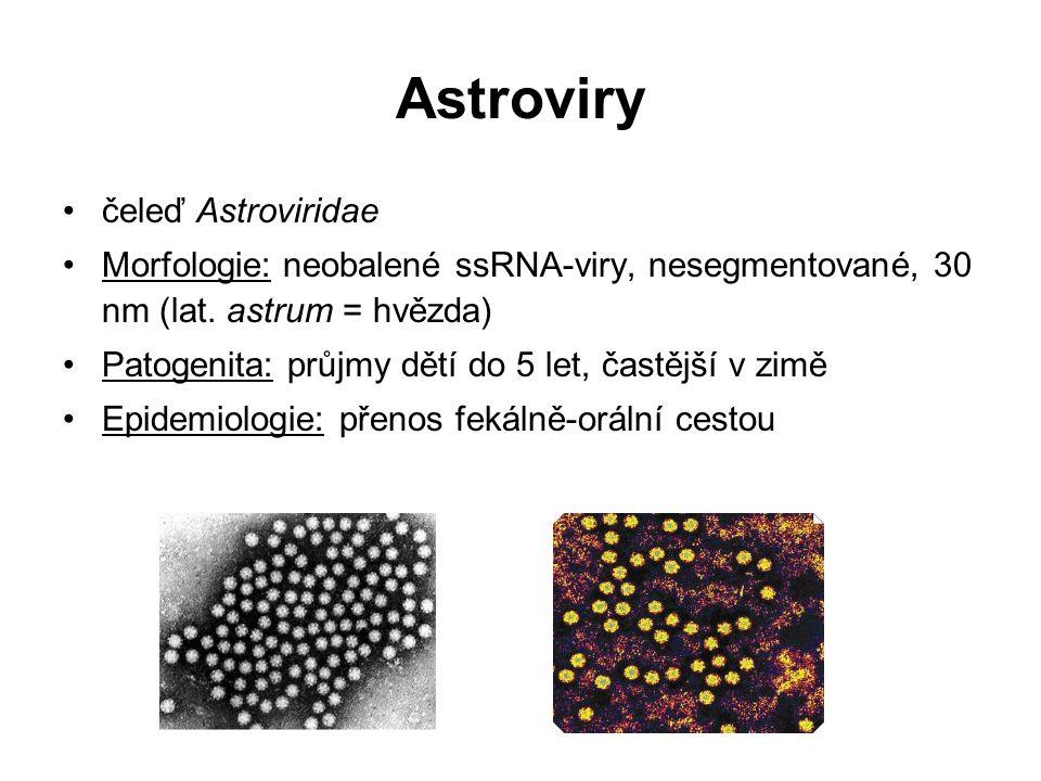 Astroviry čeleď Astroviridae Morfologie: neobalené ssRNA-viry, nesegmentované, 30 nm (lat. astrum = hvězda) Patogenita: průjmy dětí do 5 let, častější