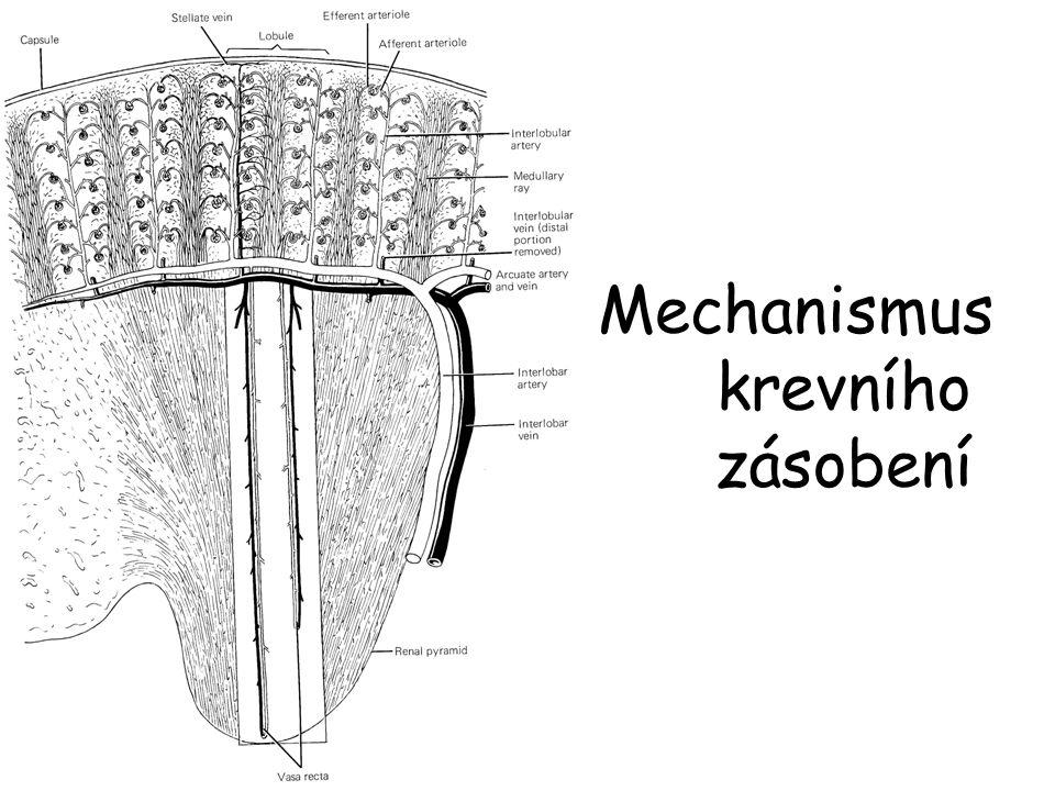 Mechanismus krevního zásobení