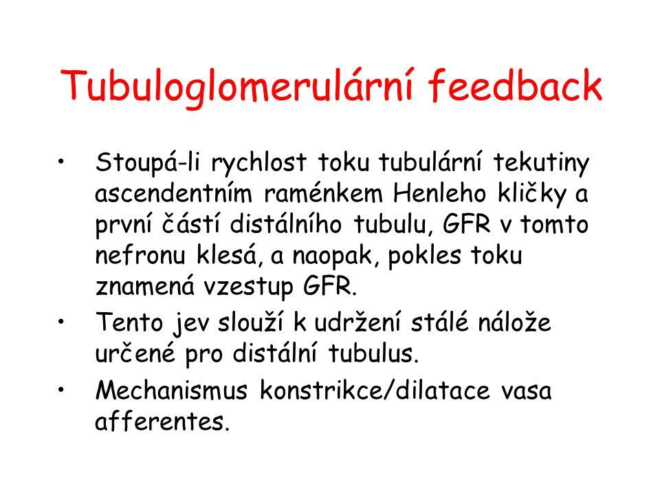 Tubuloglomerulární feedback Stoupá-li rychlost toku tubulární tekutiny ascendentním raménkem Henleho kličky a první částí distálního tubulu, GFR v tom