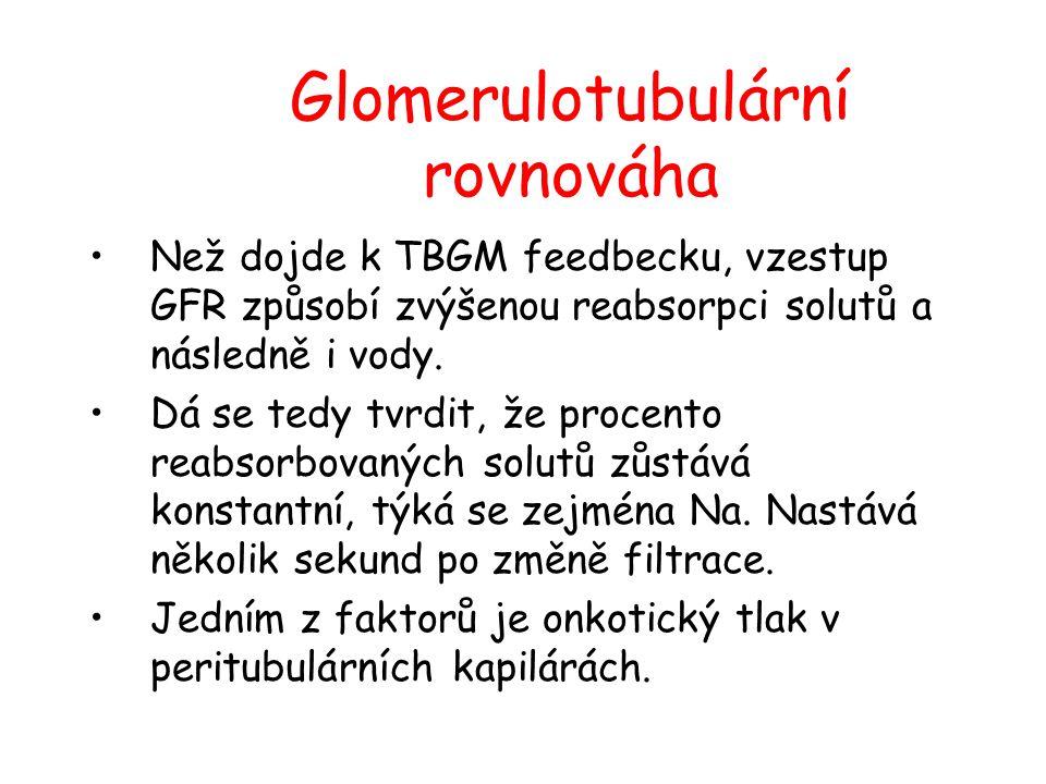 Glomerulotubulární rovnováha Než dojde k TBGM feedbecku, vzestup GFR způsobí zvýšenou reabsorpci solutů a následně i vody. Dá se tedy tvrdit, že proce