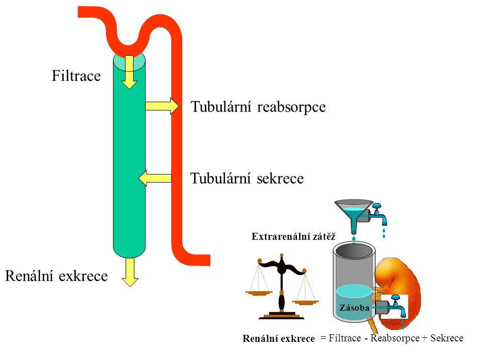 Renální exkrece Extrarenální zátěž Tubulární reabsorpce - Reabsorpce Tubulární sekrece + Sekrece Filtrace = Filtrace Zásoba