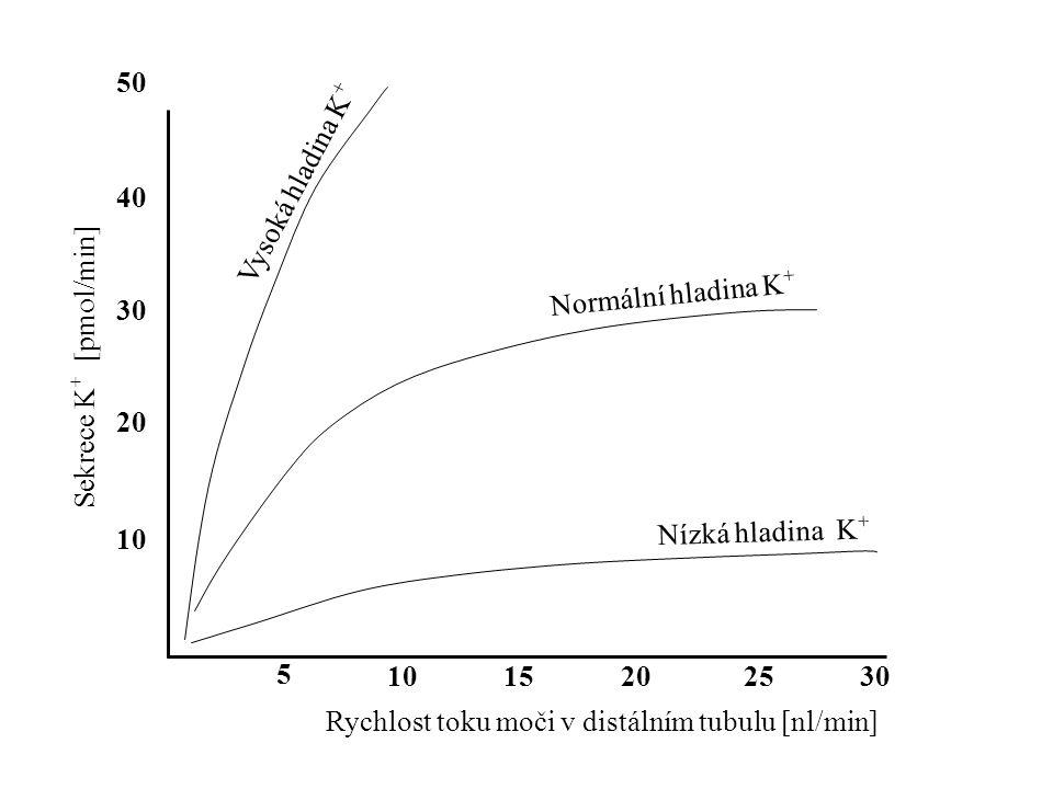 5 1015202530 10 20 30 40 50 Rychlost toku moči v distálním tubulu [nl/min] Sekrece K + [pmol/min] Normální hladina K + Nízká hladina K + Vysoká hladin
