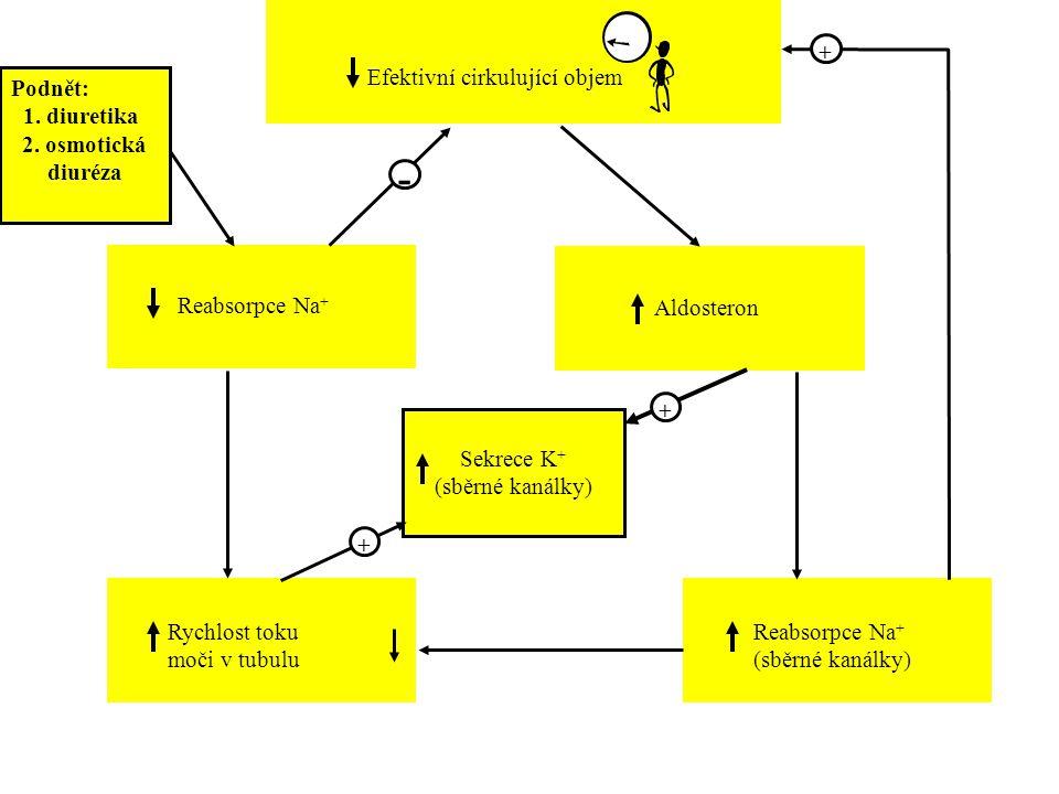 Aldosteron Rychlost toku moči v tubulu Reabsorpce Na + (sběrné kanálky) + + Sekrece K + (sběrné kanálky) + Podnět: 1. diuretika 2. osmotická diuréza R