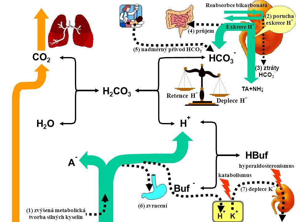 CO 2 H2OH2O H 2 CO 3 HCO 3 - Buf - HBuf H+H+ A-A- Retence H + Deplece H + TA+NH 4 + Reabsorbce bikarbonátů (3) ztráty HCO 3 - (4) průjem (6) zvracení