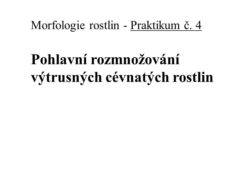 Morfologie rostlin - Praktikum č. 4 Pohlavní rozmnožování výtrusných cévnatých rostlin