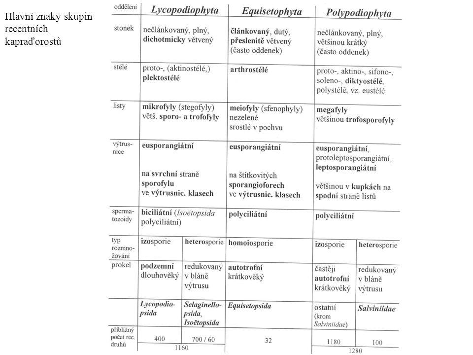 Lycopodiophyta - plavuně - eusporangiátní, mikrofylní vývojová větev - byliny (vymřelé dřeviny), vidličnaté větvení - výtrusnice na sporofylu, koncové výtrusnicové klasy, zanořená archegonia