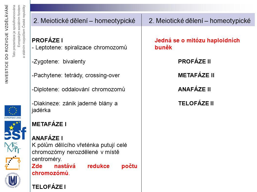 PROFÁZE I - Leptotene: spiralizace chromozomů -Zygotene: bivalenty -Pachytene: tetrády, crossing-over -Diplotene: oddalování chromozomů -Diakineze: zá
