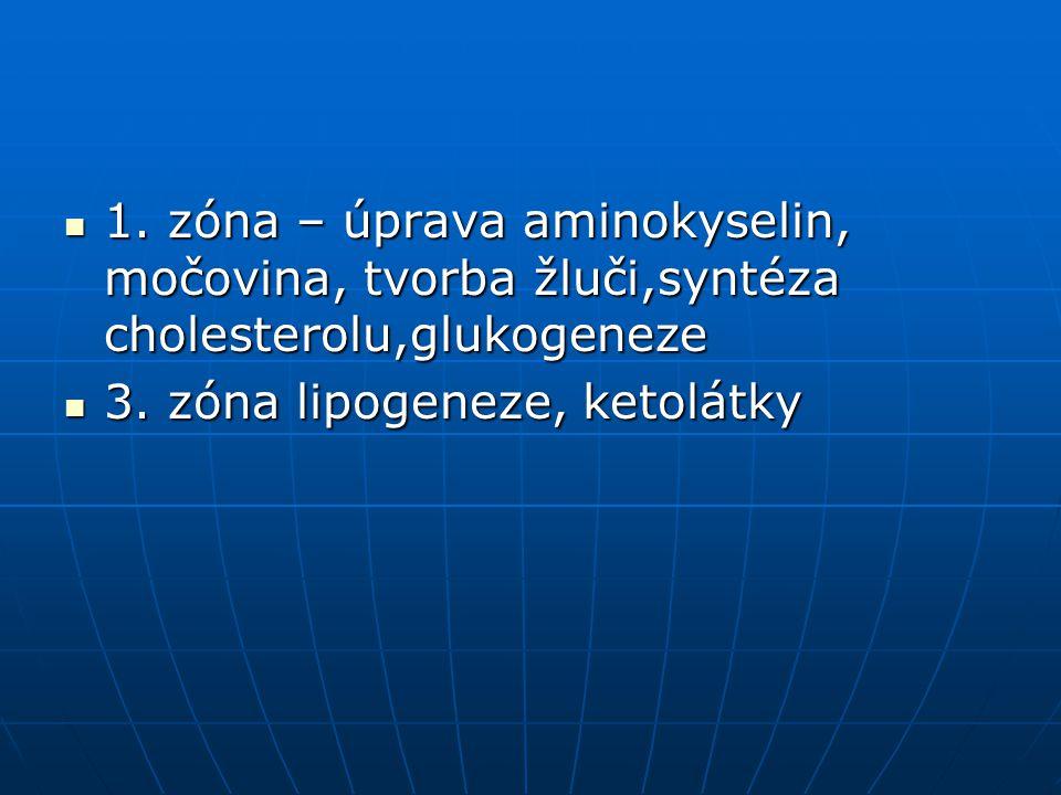 1. zóna – úprava aminokyselin, močovina, tvorba žluči,syntéza cholesterolu,glukogeneze 1. zóna – úprava aminokyselin, močovina, tvorba žluči,syntéza c