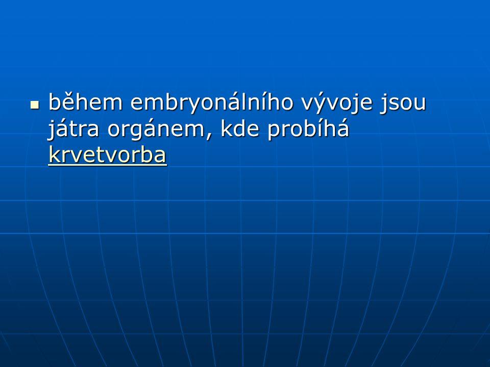 během embryonálního vývoje jsou játra orgánem, kde probíhá krvetvorba během embryonálního vývoje jsou játra orgánem, kde probíhá krvetvorba krvetvorba